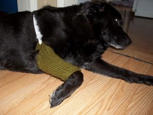 free knitting patterns for pets